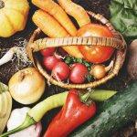 免疫力を高めるために必要な栄養は?おすすめの食べ物5選、飲み物3選!