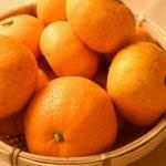 みかんで免疫力を上げよう!免疫力を上げる栄養素と嬉しい効果を解説!