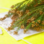 花粉症と免疫力の低下には関係がある?花粉症を悪化させる生活習慣を紹介!
